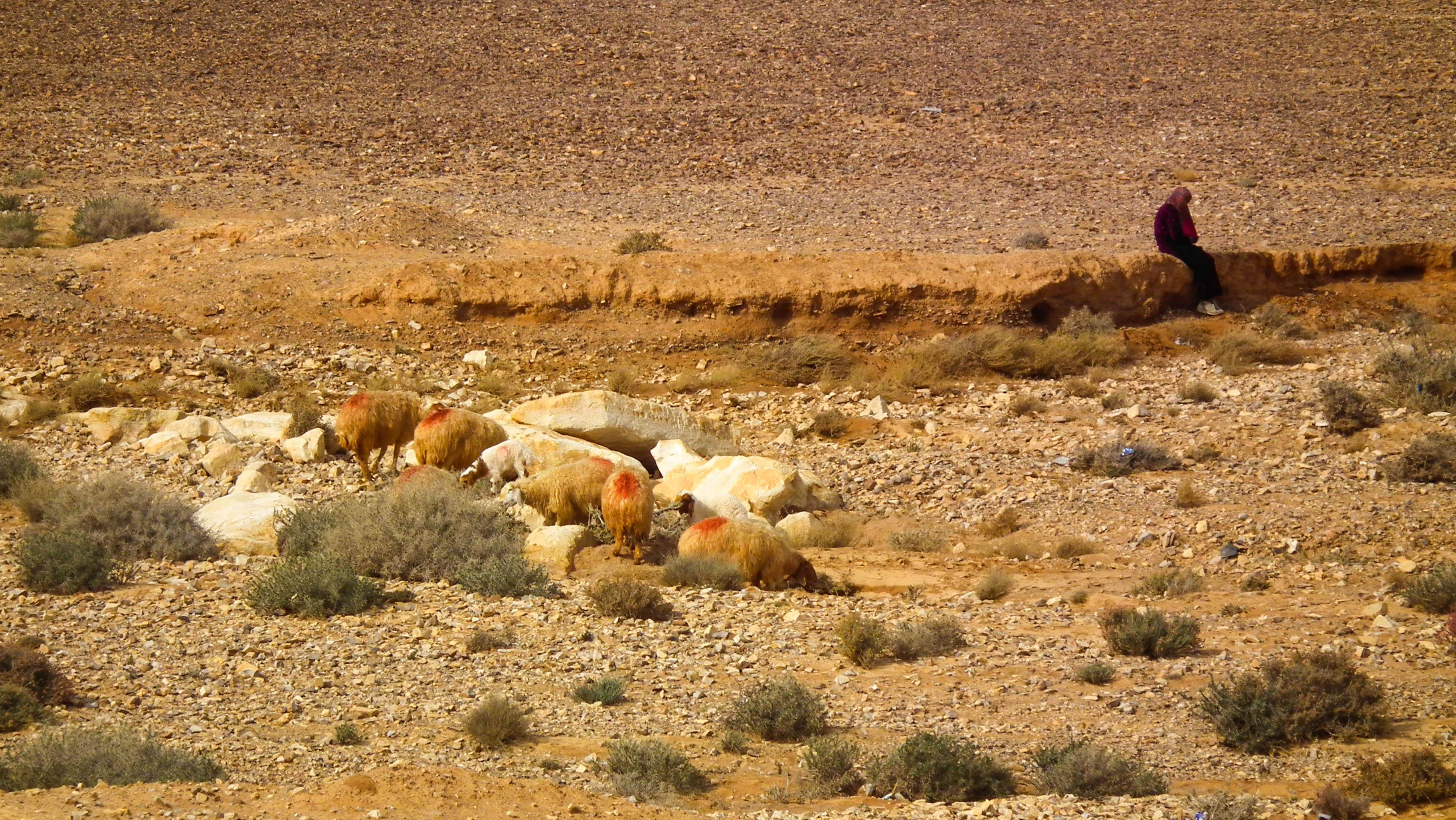 Jordania, Badia, pustynia, Al-Badiyah