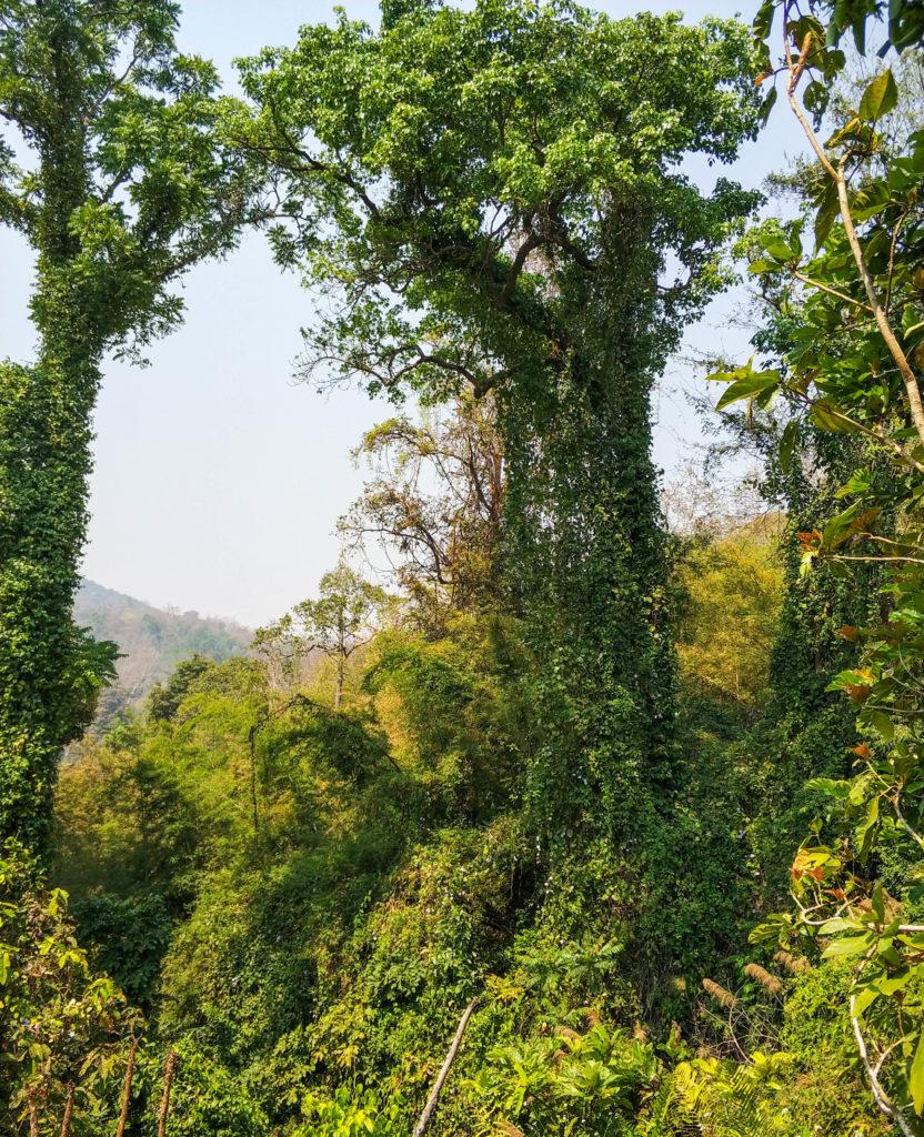 dżungla, Tajlandia
