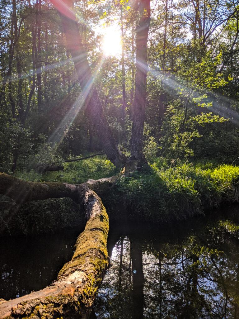 Rezerwat przyrody Puszcza Słupecka